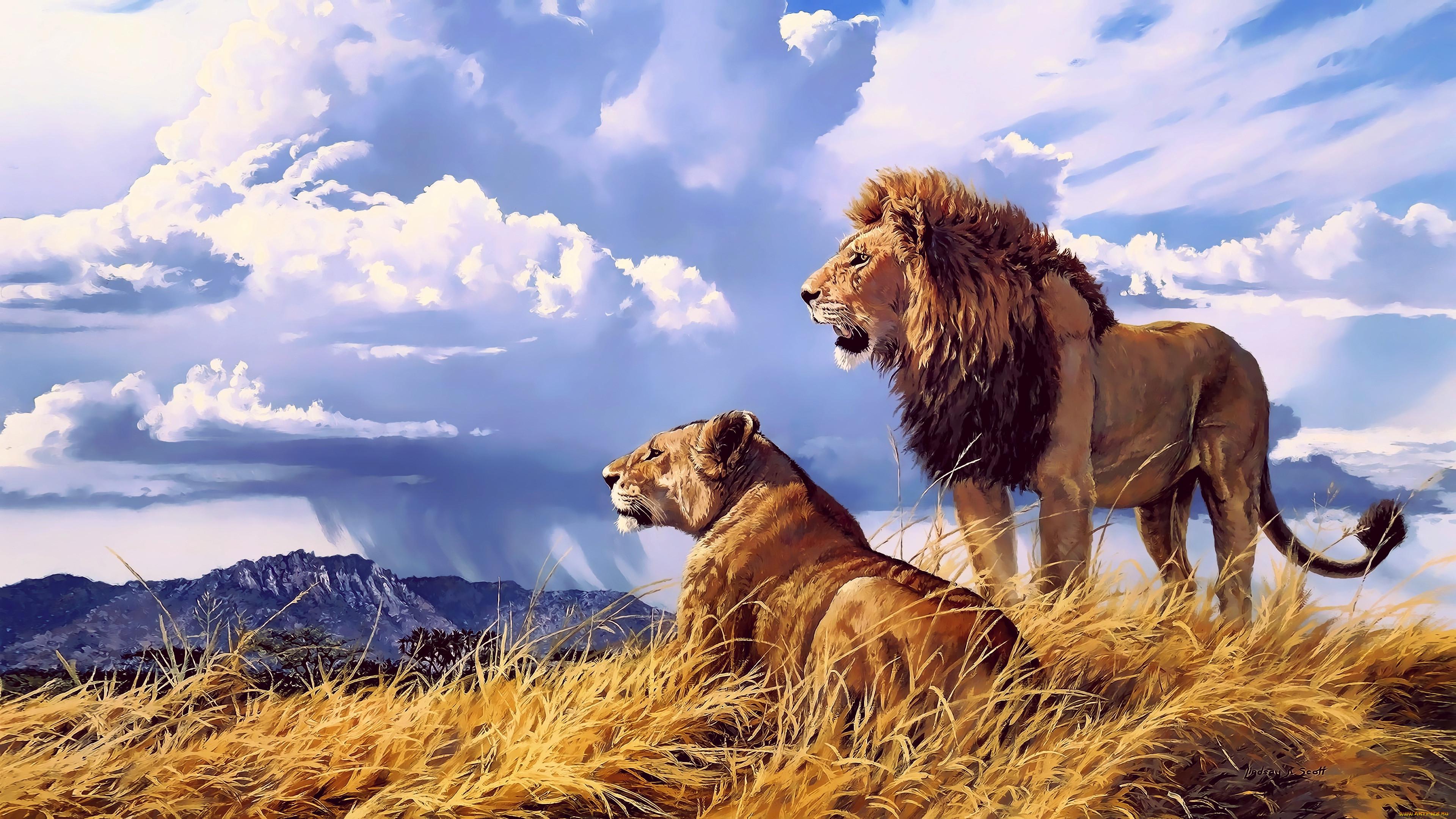 словам юноши, картинки для скачивания львы бань